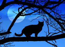 Кошки в фольклоре и мифологии