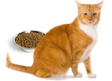 Что делать, если у кошки пропал аппетит