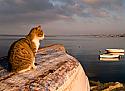 Кошки и морские путешествия