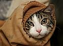 Индивидульность вашей кошки